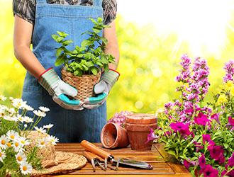 produzione e vendita di piante da ornamento e da frutto