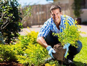 Produzione di piante da giardino ornamentali da esterno di ogni tipo e misura
