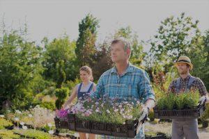 Vivaio piante giardino dalmonte gaspare faenza