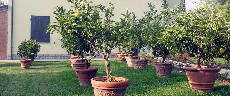 Piante Da Frutto Sempreverdi piante da giardino | vivai dalmonte gaspare faenza.